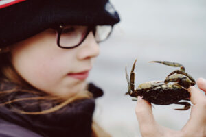 the crab - copyright Maria Fynsk Norup